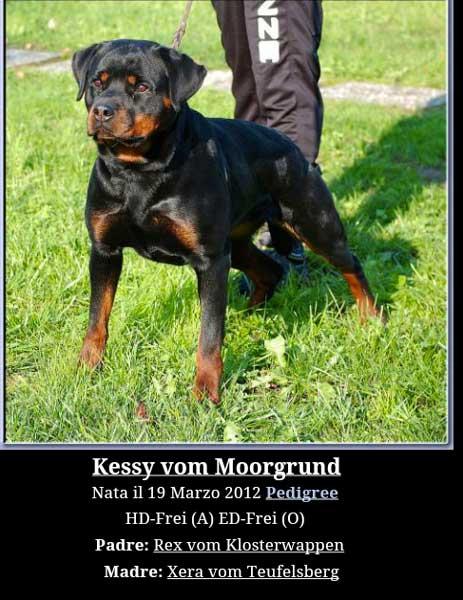 Kessy Vom Moorgound