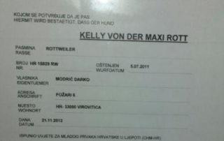 Kelly Maxi Rott